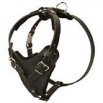 Protection Leather Riesenschnauzer Harness for Attack / Agitation Dog Training