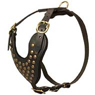 Adjustable Studded Leather Riesenschnauzer Harness for Fashion Walking