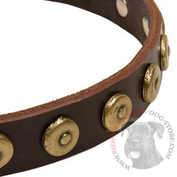 Riesenschnauzer Collar with Stylish Circles