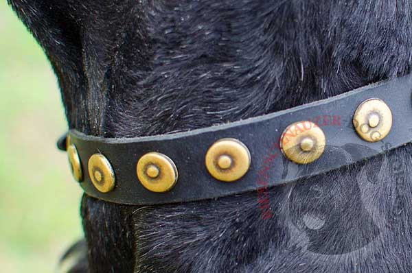 Doted Circles Riveted to Riesenschnauzer Leather Collar