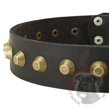 Leather Dog Collar with Brass Pyramids for Riesenschnauzer