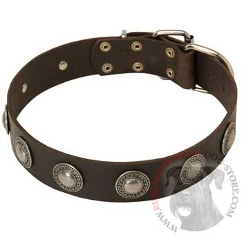 Training Leather   Riesenschnauzer Collar for Stylish Dogs