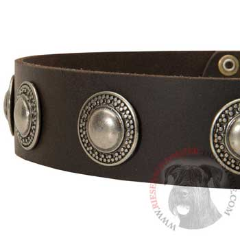 Leather Dog Collar with Conchos for   Riesenschnauzer