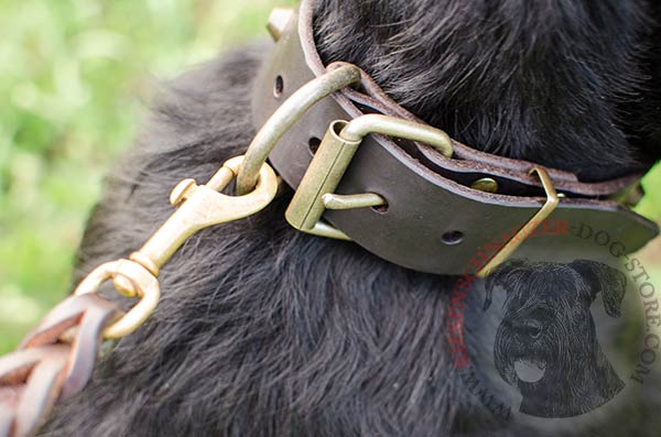 Studded leather Riesenschnauzer collar with durable hardware