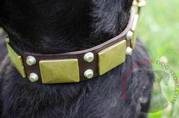 Strong and comfortable collar with brass plates and nickel-plated cones