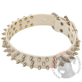 Spiked White Leather Collar for Riesenschnauzer Walking