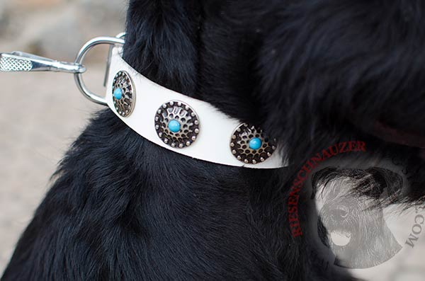 Outstanding decorations on white leather Reisenschnauzer collar
