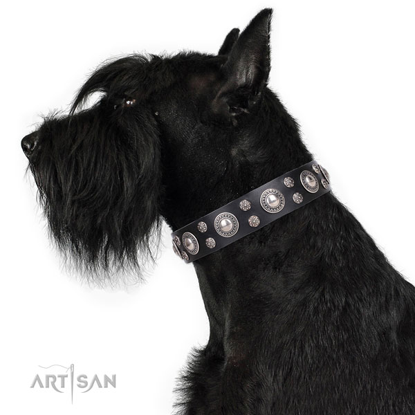 Stylish walking studded dog collar of fine quality genuine leather
