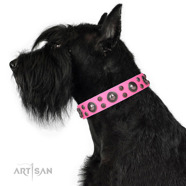 Walking embellished dog collar of fine quality natural leather