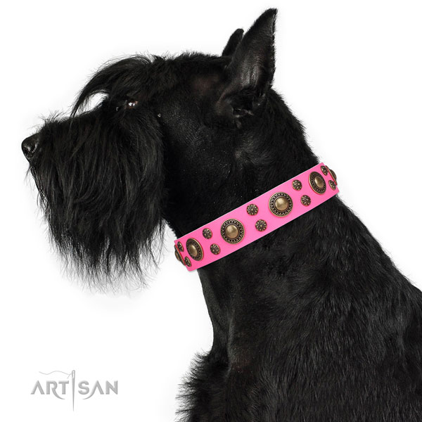 Daily walking adorned dog collar of top notch material
