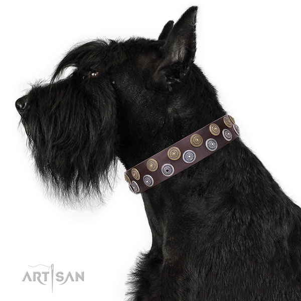 Comfortable wearing embellished dog collar of finest quality material