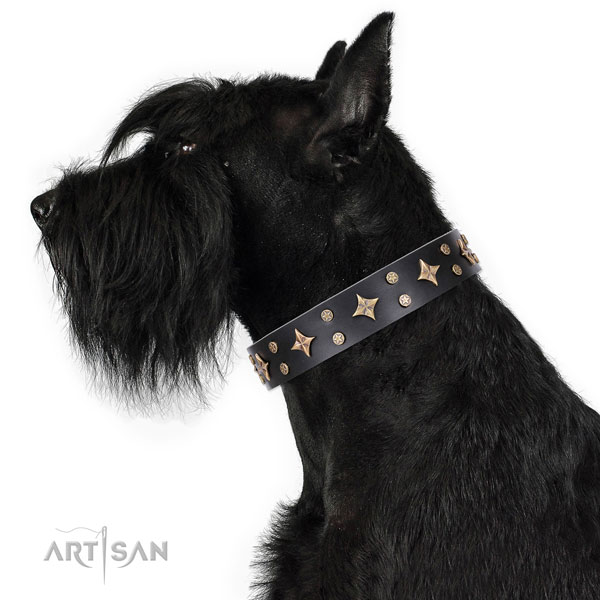 Comfy wearing studded dog collar of finest quality material