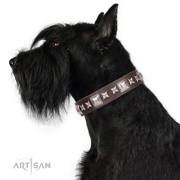 Fancy walking embellished dog collar of quality material