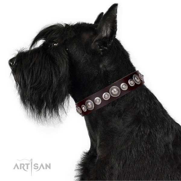 Trendy adorned leather dog collar for basic training