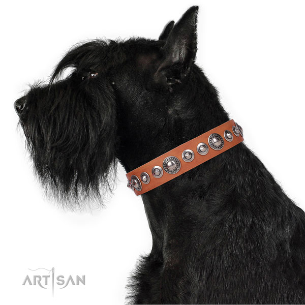 Stunning studded natural leather dog collar for basic training