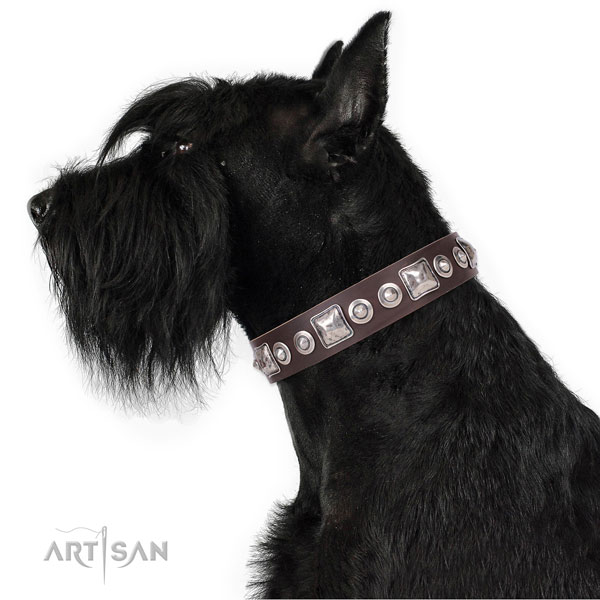 Impressive decorated leather dog collar for basic training