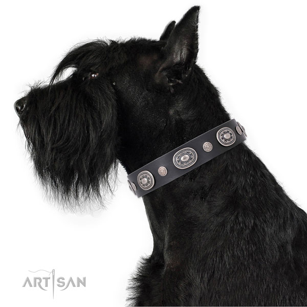 Rust resistant buckle and D-ring on genuine leather dog collar for stylish walking