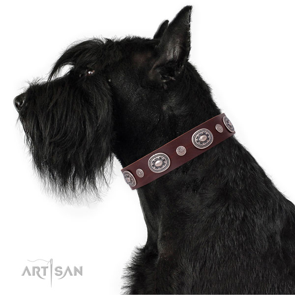 Durable buckle and D-ring on genuine leather dog collar for walking in style