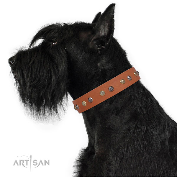 Full grain leather dog collar with rust-proof buckle and D-ring for everyday walking