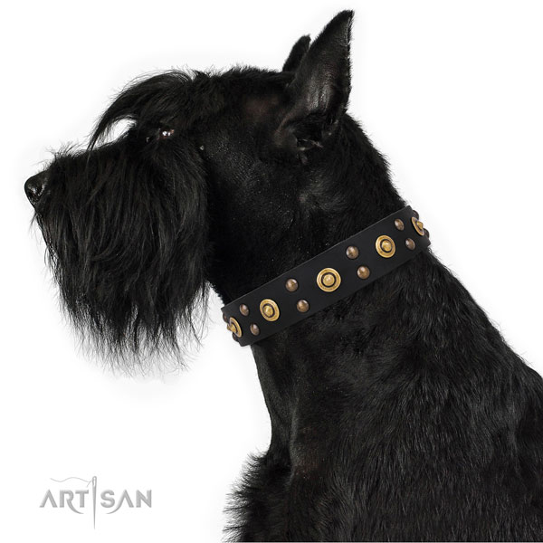 Stylish walking dog collar with top notch embellishments