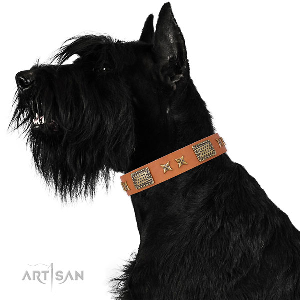 Daily walking dog collar with impressive adornments