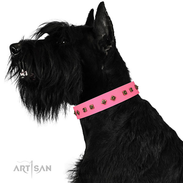 Top notch studs on easy wearing dog collar