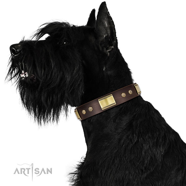 Daily use dog collar of leather with unusual adornments