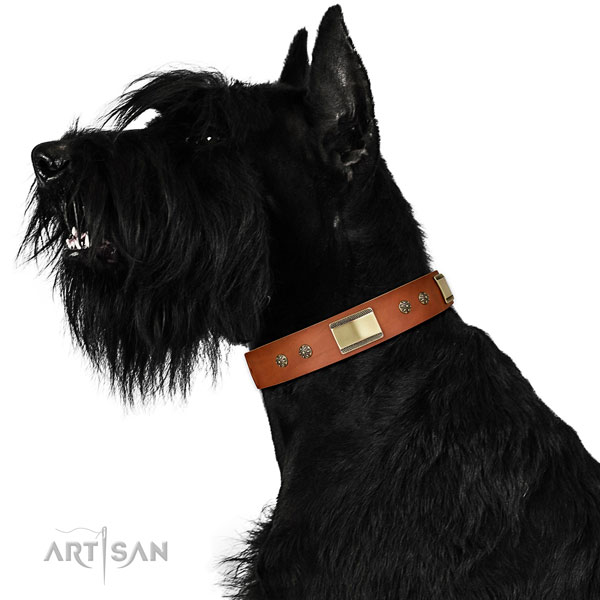 Everyday walking dog collar of genuine leather with designer embellishments