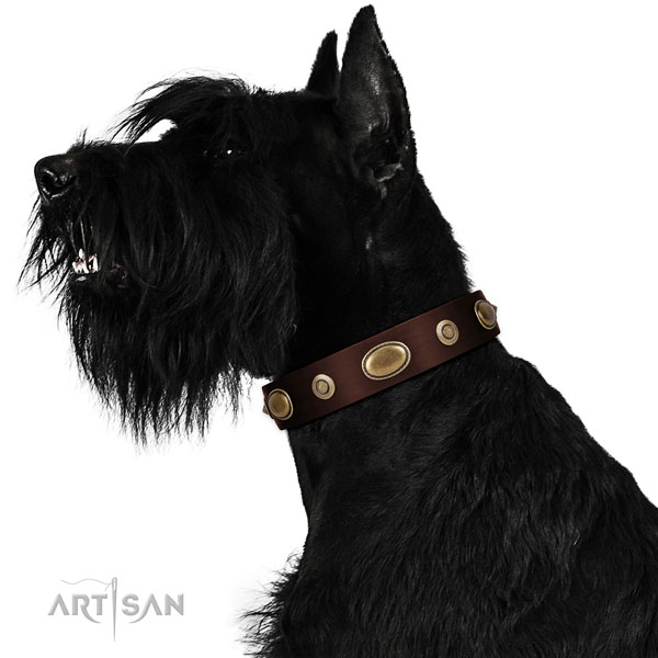 Everyday use dog collar of natural leather with top notch adornments