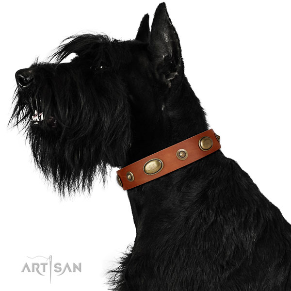 Comfortable wearing dog collar of natural leather with remarkable studs