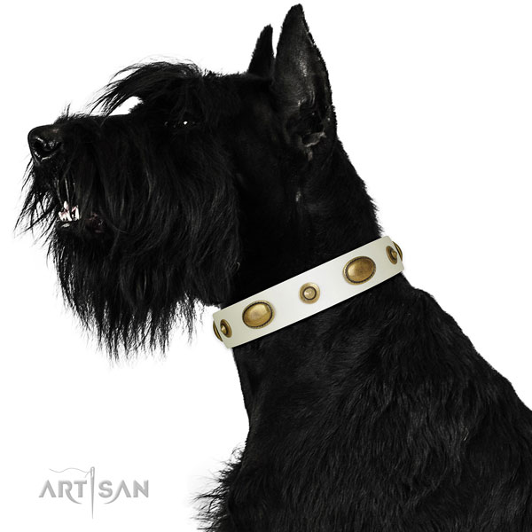 Stylish walking dog collar of leather with amazing studs