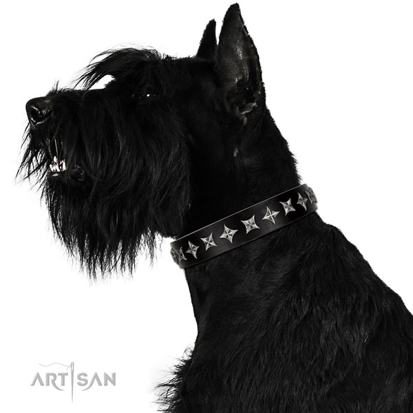 Walking embellished dog collar of finest quality natural leather
