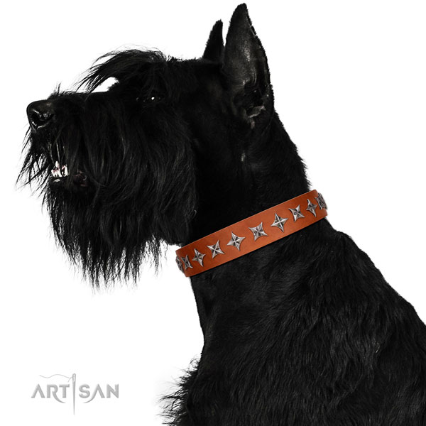 Best quality full grain leather dog collar with exceptional studs