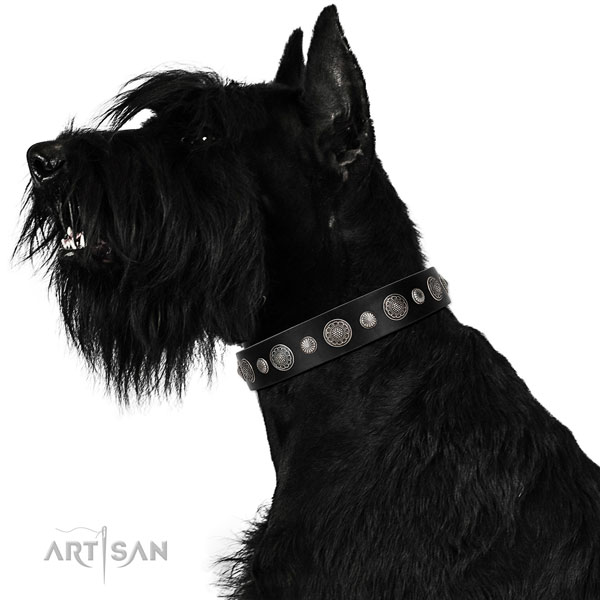 Natural leather collar with durable fittings for your beautiful canine