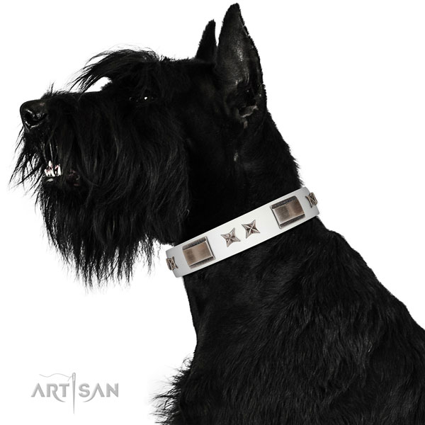Exceptional collar of full grain leather for your beautiful four-legged friend