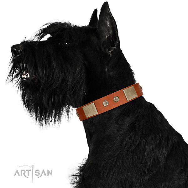 Corrosion resistant buckle on full grain leather dog collar for walking