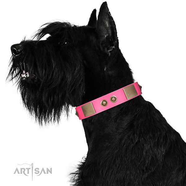 Fancy walking dog collar of natural leather with exquisite studs