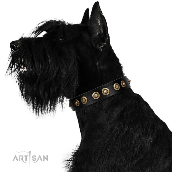 Walking dog collar of natural leather with extraordinary embellishments