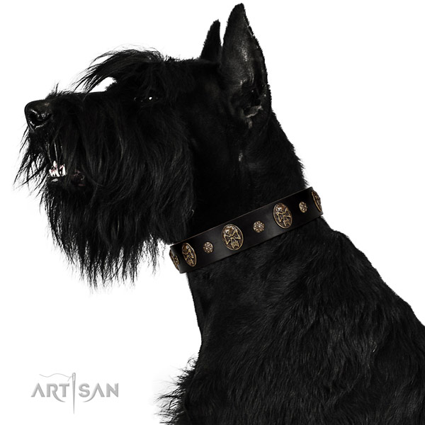 Basic training dog collar of natural leather with top notch studs