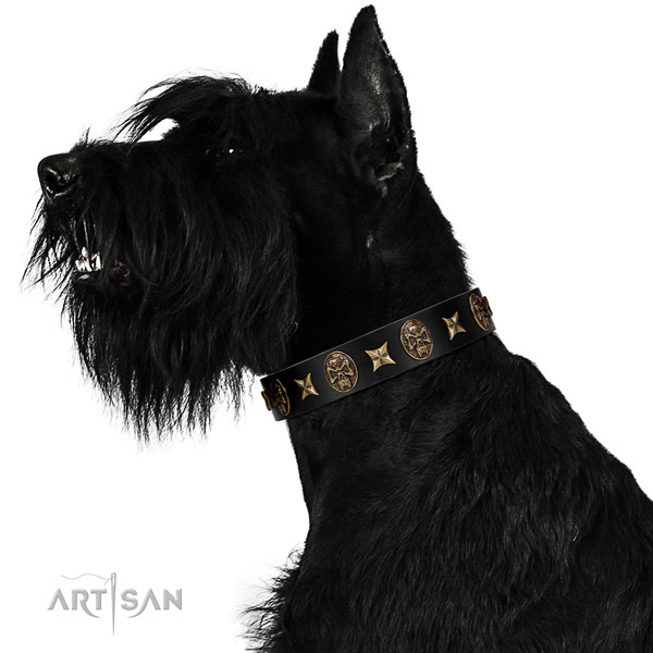 Comfortable wearing dog collar of natural leather with top notch studs