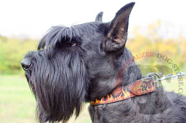 Burning Painted Leather Riesenschnauzer Collar for Effective Training and Daily Walking