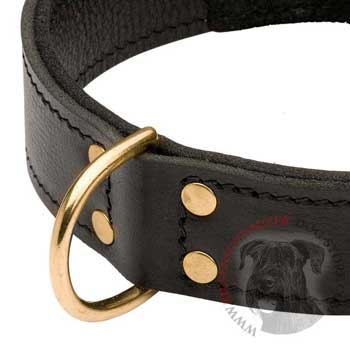 Brass D-ring Stitched to Leather Riesenschnauzer Collar
