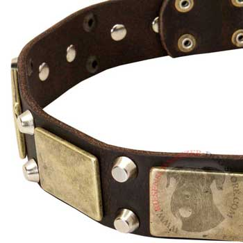 Leather Riesenschnauzer Collar with Nickel Studs