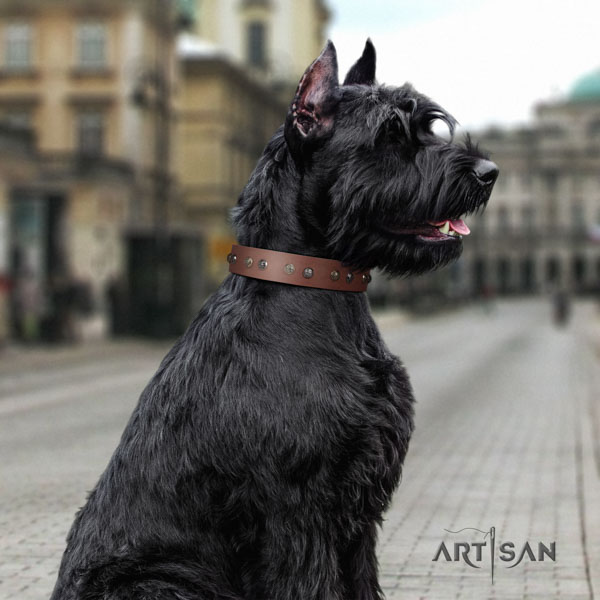 Riesenschnauzer everyday use natural leather collar with embellishments for your four-legged friend