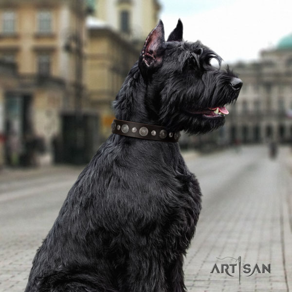 Riesenschnauzer stylish walking full grain natural leather collar with studs for your doggie