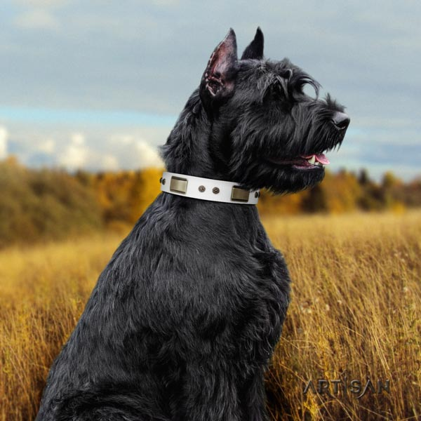 Riesenschnauzer walking full grain natural leather collar with embellishments for your dog
