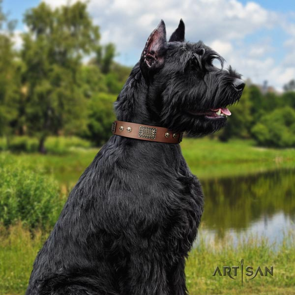 Riesenschnauzer fancy walking full grain natural leather collar with studs for your dog