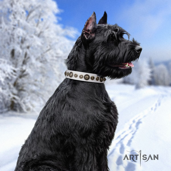 Riesenschnauzer walking genuine leather collar for your handsome canine