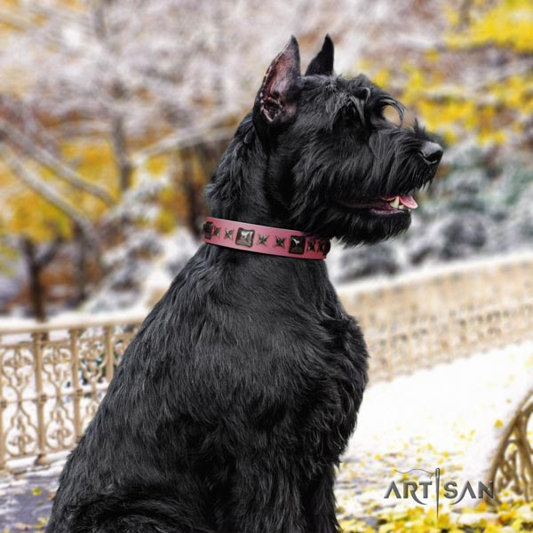 Riesenschnauzer stylish walking genuine leather collar for your lovely four-legged friend
