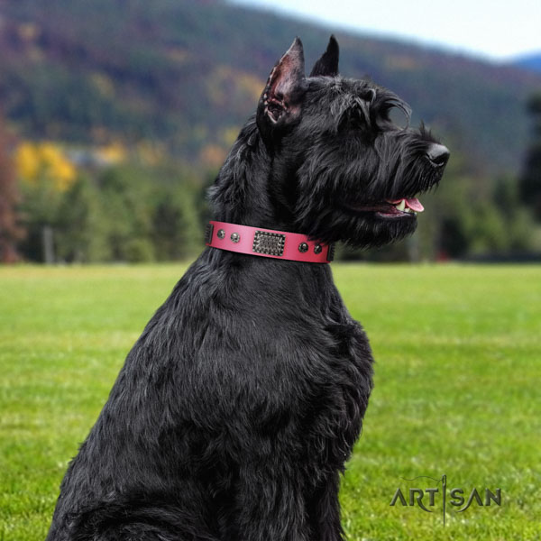 Riesenschnauzer comfy wearing full grain genuine leather collar with adornments for your doggie